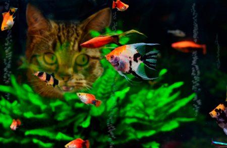 صور اسماك الزينة