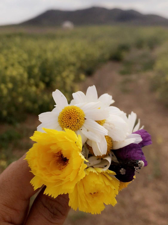 وقلبي ❤️ لحب الورد ميال .. عدستي
