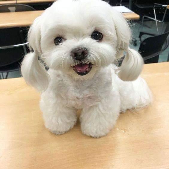صور اجمل الكلاب 2019 , صور لكلاب رائعة 2019