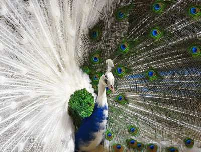 صور طيور نادرة