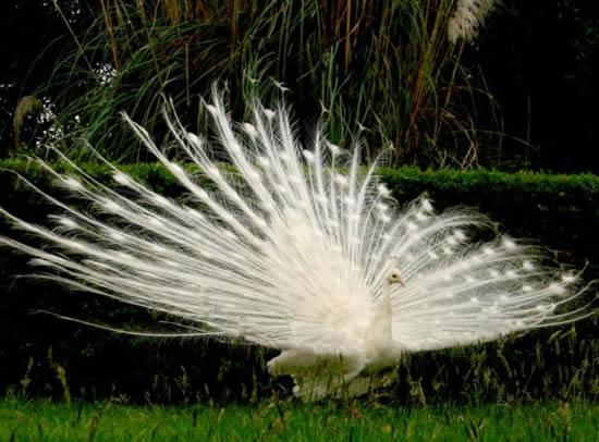 صور نادرة - صور حيوانات بيضاء كالثلج