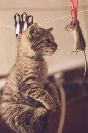 صور حيوانات مضحكة صور فكاهية مره